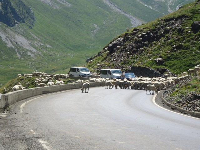 gypsy ways update 6 basque sheep on the road through the pyrenees