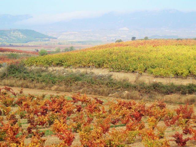 gypsy ways update 6 rioja spain in the fall